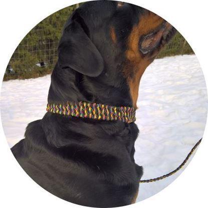 Paracord koiranpanta